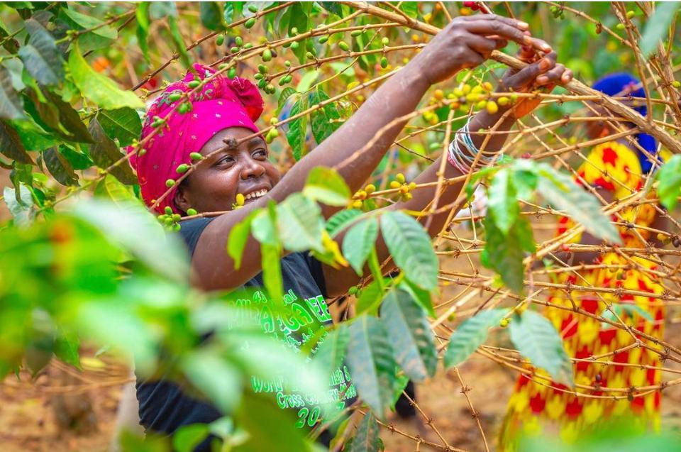 Women coffee growers